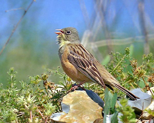 Птицы россии фото с названиями птицы